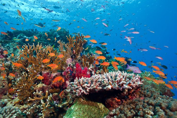 Digital hub designed to protect coral reefs shortlisted for global award