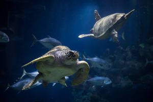 Loggerhead Turtle The Deep