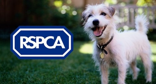 RSPCA Hull and East Riding Receives £500 Championing Grant